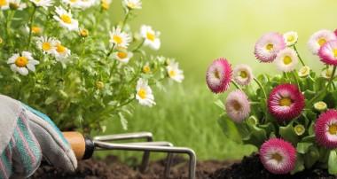 Arranging Companies Offer More Than Landscape Design
