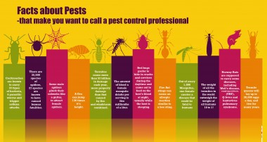 Why pest control is important for every human?